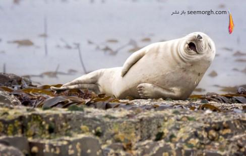 julie hunt,خوک دریایی,عکاسی,حیات وحش