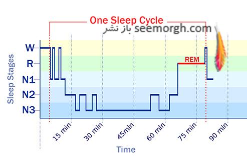 دوره های خواب,جدول دوره های خواب