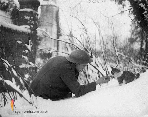 سرباز,گربه,غذا دادن,عکس قدیمی
