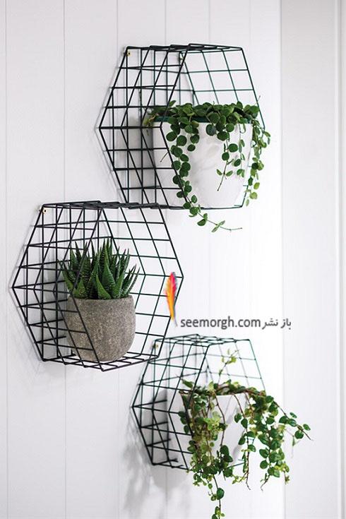 گیاهان آپارتمانی,گل های آپارتمانی,چیدمان خانه با گیاهان,پرورش گیاهان آپارتمانی,گیاهان خانگی در دکوراسیون