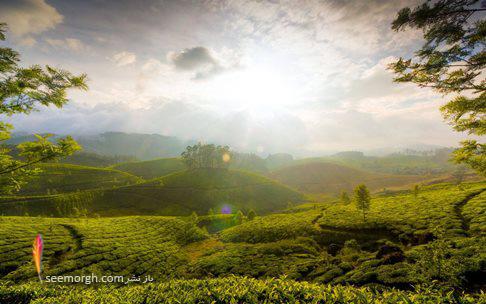 تپه باغ چای مونار,Munnar,هندوستان