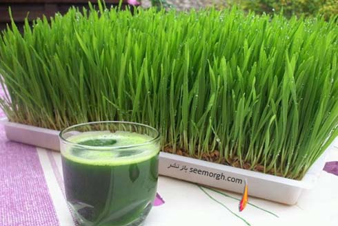 سبزه گندم،آب سبزه گندم
