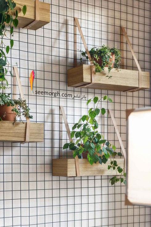 گیاهان آپارتمانی,گل های آپارتمانی,چیدمان خانه با گیاهان,پرورش گیاهان آپارتمانی