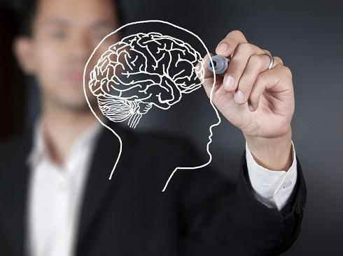 مغز,طراحی مغز