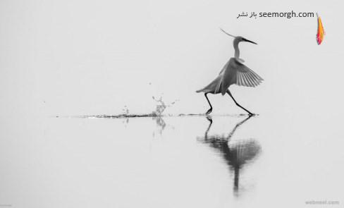 mauro rossi,عکاسی سیاه و سفید,عکاسی حیات وحش