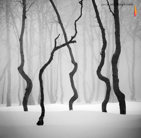 daniel rericha,عکاسی سیاه و سفید