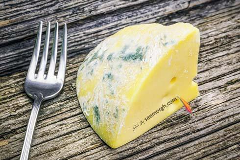 پنیر کپک زده