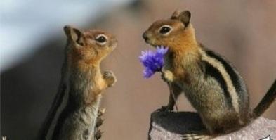 گل هدیه دادن سنجاب