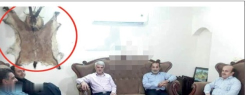 جسد قوچ به دیوار جلسه مسئولان دولتی مازندران