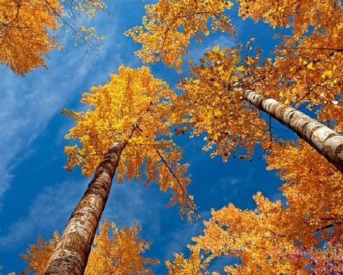 عکاسی,اموزش عکاسی,آموزش عکاسی از پاییز,عکاسی طبیعت پاییز,پاییز