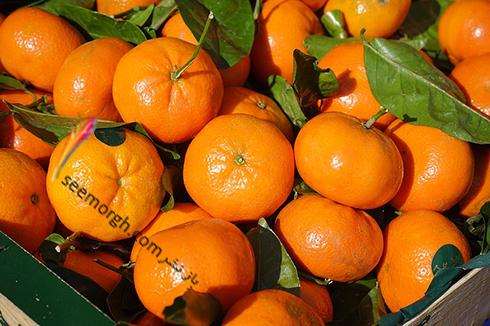 نارنگی,نارنگی و دیابت
