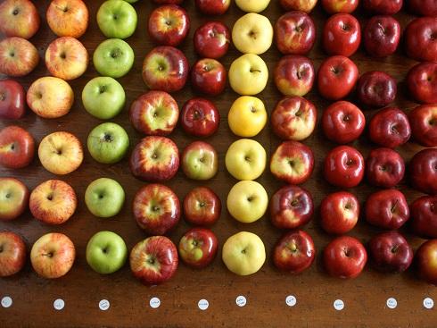 سیب,انواع سیب