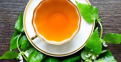 چای گزنه