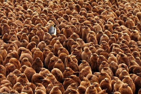 عکس زیبا از پنگوئن ها