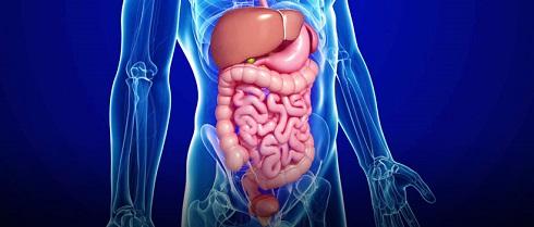 Digestive-System,دستگاه-گوارش