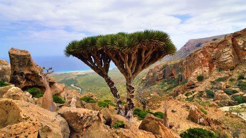 جزیره,عجیب ترین مکان ها,جزیره های عجیب,عجایب,سوکوترا,Socotra