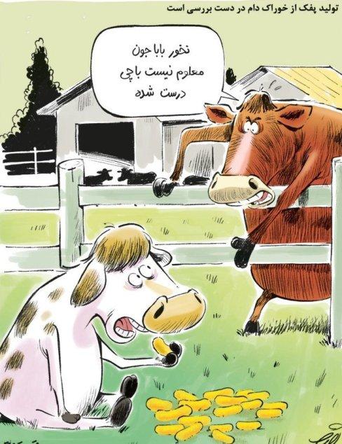 انتشار اخباری مبنی بر تولید پفک از خوراک دام از سوی جهاد کشاورزی