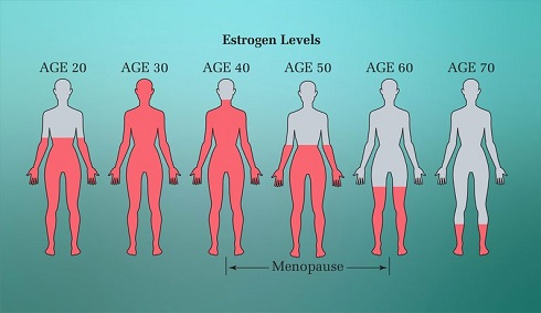 estrogen,ستروژن