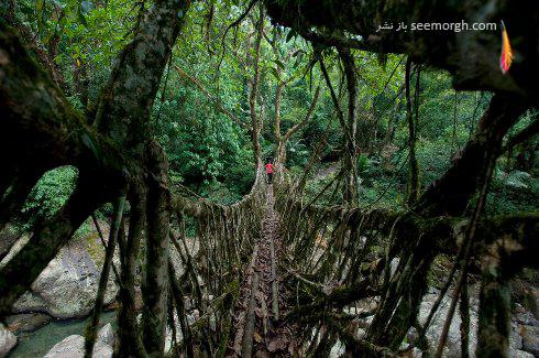 پل های جالب,پل های عجیب,نشنال جئوگرافیک