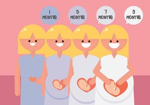 بارداری,حاملگی