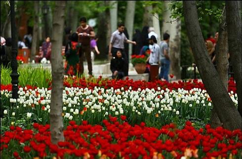 باغ لاله ایرانی