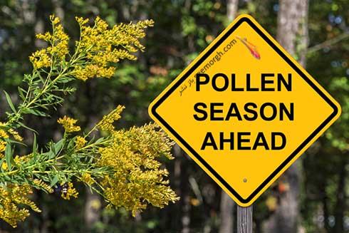 Spring Allergies Worse1.jpg