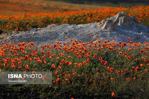 flower red2.jpg