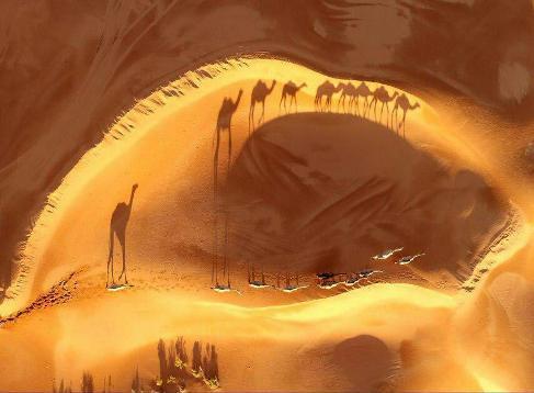 عبور کاروان شتر ها از بیابان ریاض