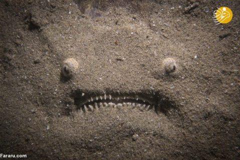 ماهی استتار شده در کف اقیانوس