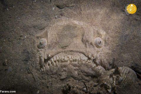 ماهی استتار شده در کف اقیانوس 2