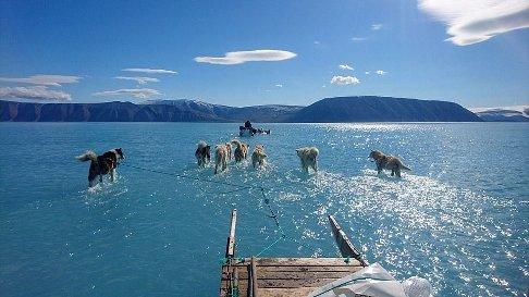 سگ های قطبی برروی یخ های آب شده