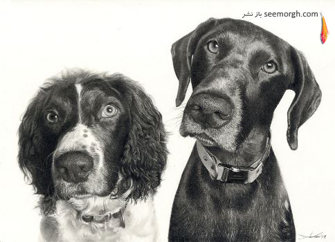 نقاشی,طراحی,سیاه قلم,John Fisher,سگها