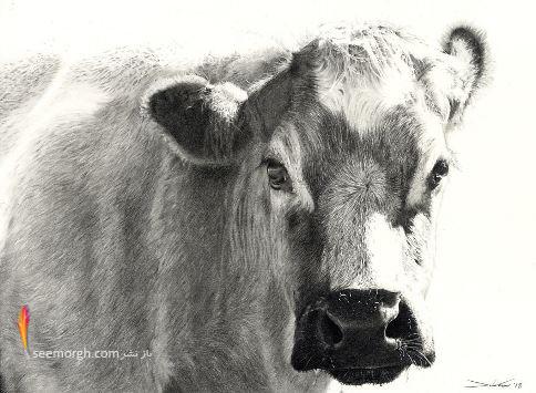 نقاشی,طراحی,سیاه قلم,John Fisher,پرتره