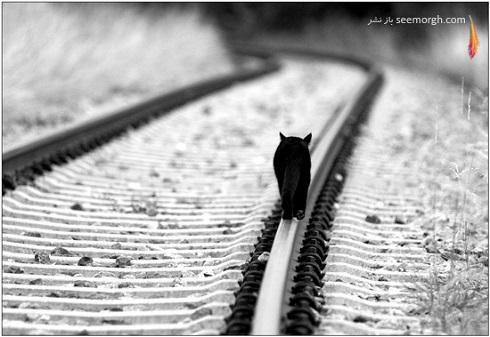مجموعه عکس های سیاه و سفید