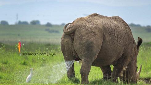 عکاسی کمدی,عکاسی حیوانات,مسابقه عکاسی,عکاسی طنز حیات وحش,برگزیدگان مسابقه عکاسی