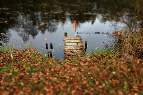عکاسی در پاییز