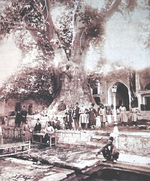 چنار کهنسال امامزاده صالح در دوره قاجار