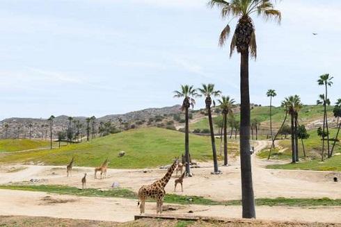 باغ وحش سن دیگو در کالیفرنیا