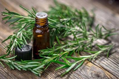 درمان سرفه با روغن رزماری,درمان سرفه با کمک 4 روغن طبیعی
