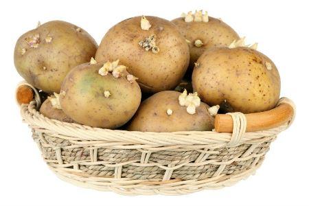 جلوگیری از جوانه زدن سیب زمینی با یک روش ساده!