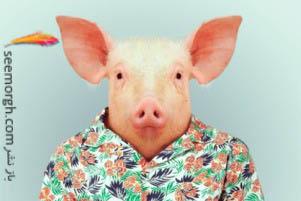 عکس های بامزه از حیوانات وقتی که شبیه انسان لباس می پوشند!