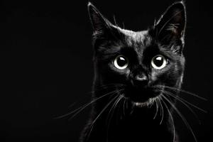چرا می گویند گربه سیاه بدشانسی می آورد؟