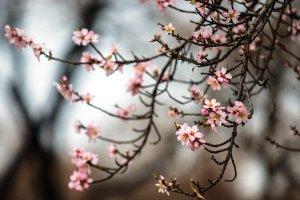 عکس های زیبا از شکوفه های بهاری در باغ های قزوین