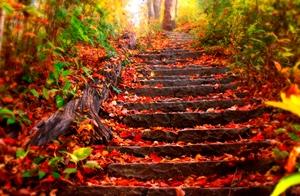پاییز آمد و افسردگی فصلی در کمین است