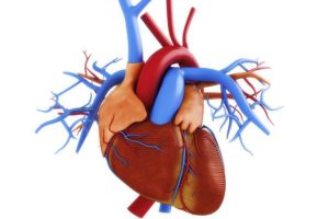 چرا آنزیم قلب بالا میرود