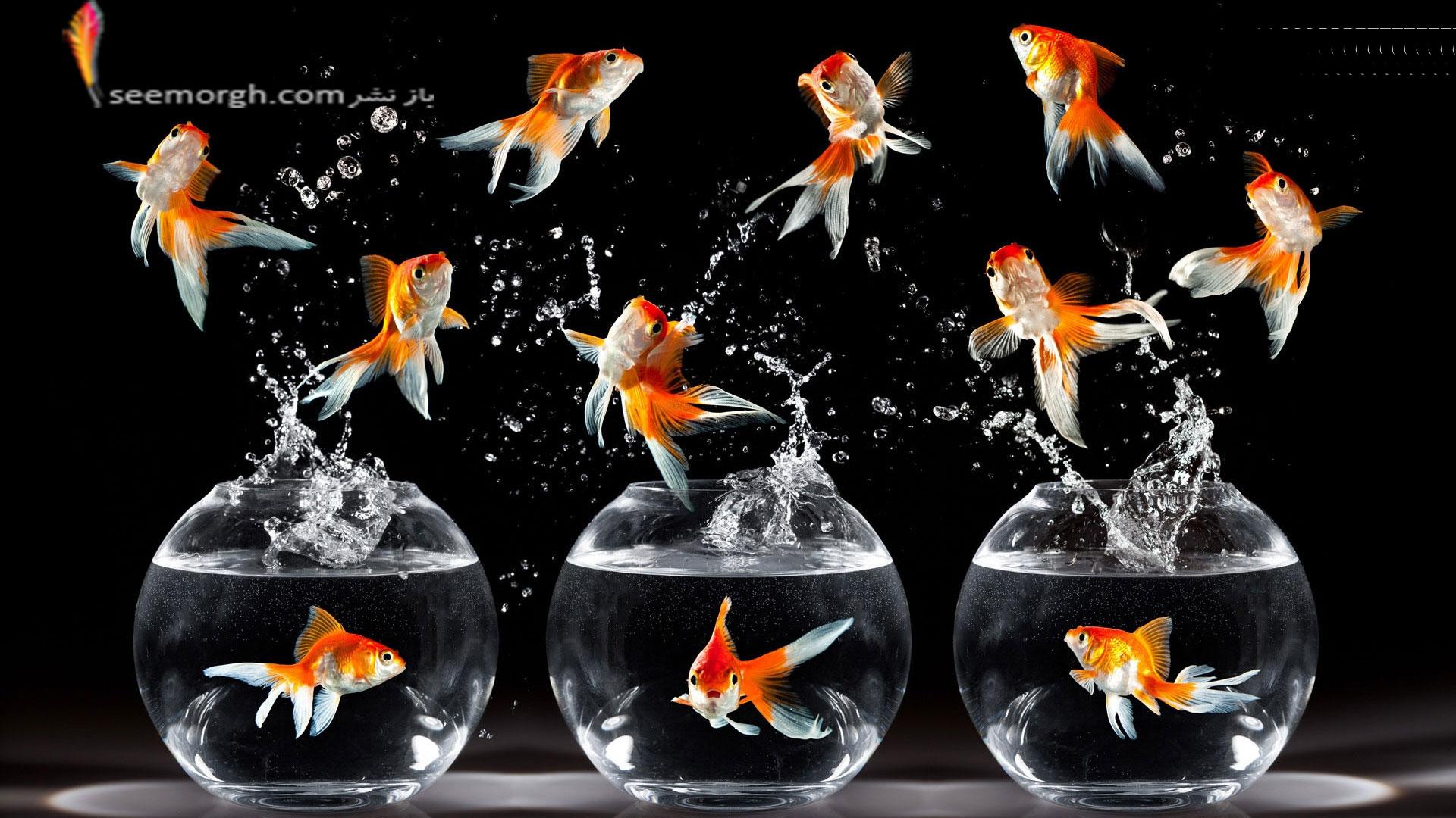 هفت سین سر مزار ماهی قرمز سفره هفت سین از کجا آمده