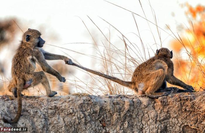 عکس های دیدنی از دنیای حیوانات