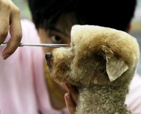 مد در دنیای سگ ها 2