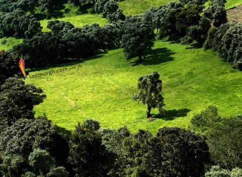درخت تنها در محاصره درختان!