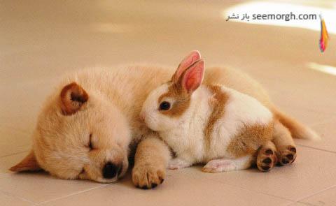 سگ و خرگوش